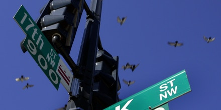 Pigeons fly over the intersection of 17th and K streets in northwest Washington Thursday, Jan. 26, 2006. K Street bisects the nation's capital on a route that stretches from Georgetown through the city's business district into a working-class neighborhood. But