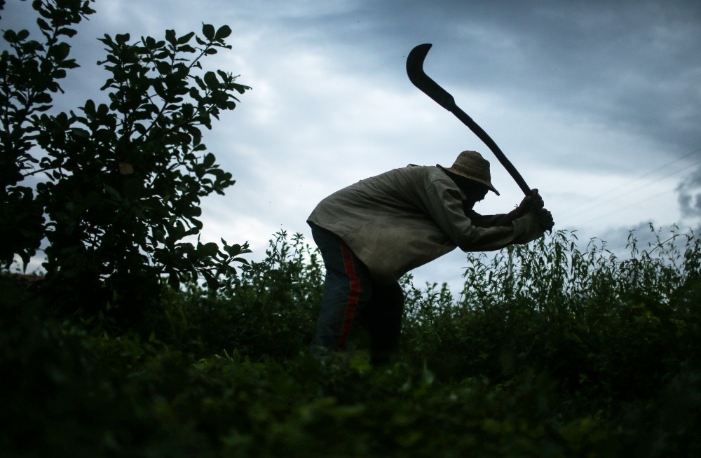 MONSENHOR GIL, BRAZIL - APRIL 8: Former slave Francisco Rodrigues dos Santos demonstrates how he clears brush with his sickle on the piece of land which he lives and farms at the Nova Conquista settlement on April 8, 2015 in Monsenhor Gil, Piauí state, Brazil. He said he used the same type of tool when he was enslaved. (Photo by Mario Tama/Getty Images)