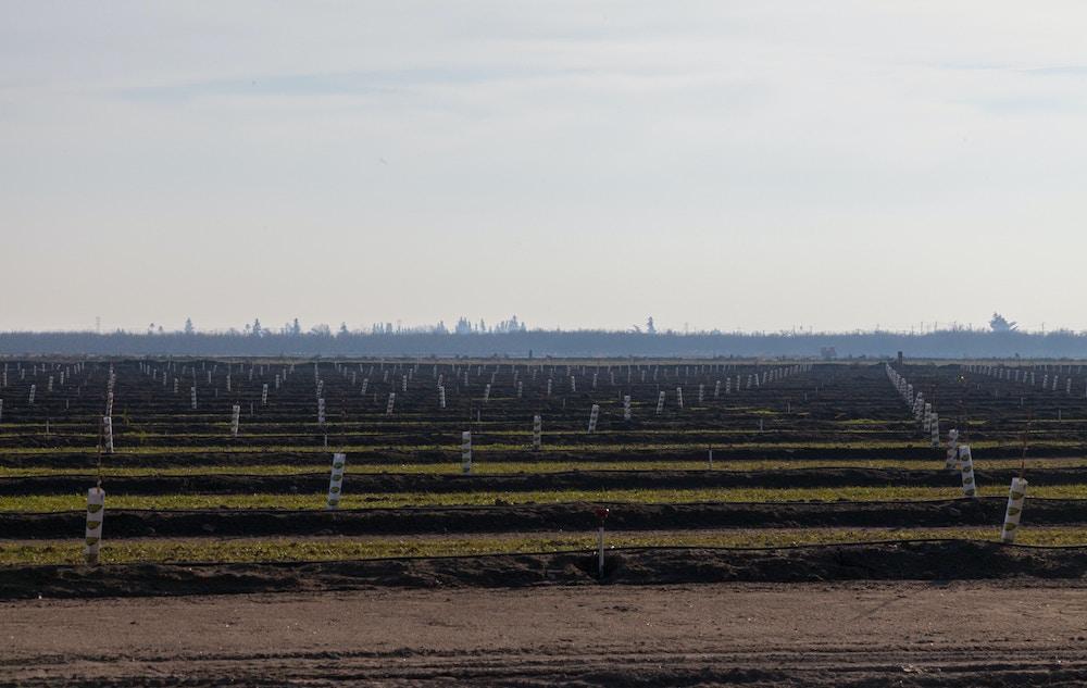 Farms next to the neighborhood Eva galindo grew up in photographed on Dec. 29, in Salida, Calif.