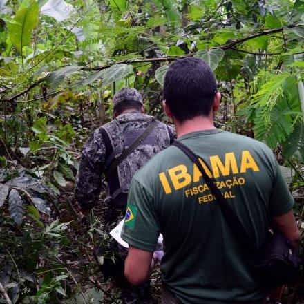 Fiscalização de desmatamento na Floresta Nacional do Jamanxim em Novo Progresso, Pará.