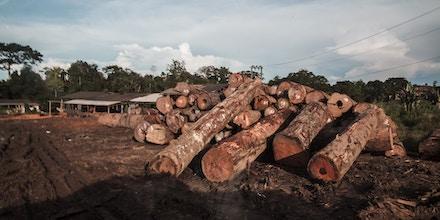 Toras de madeira próximas ao município de Trairão
