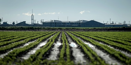 Row crops are seen in front of the Cummins Unit where the Arkansas death chamber is housed near Gould, Arkansas. In April four inmates were executed in eight days at the facility before a drug used in the lethal injection process expired. (Photo by Brandon Dill for The Intercept)