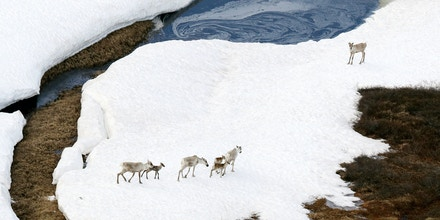 AK - JUNE 18:  (CHINA OUT, SOUTH KOREA OUT) In this aerial image, caribous are seen at the Arctic National Wildlife Refuge (ANWR) on June 18, 2017 in Alaska, United States. In April 2017, U.S. President Donald Trump signed an executive order to expand drilling in the Arctic Ocean just four months after his predecessor Barack Obama banned, as a part of 'America First Energy Plan' to reduce dependence on imported oil. In June Trump announced that the United States withdrew from the Paris agreement on climate change.  (Photo by The Asahi Shimbun via Getty Images)