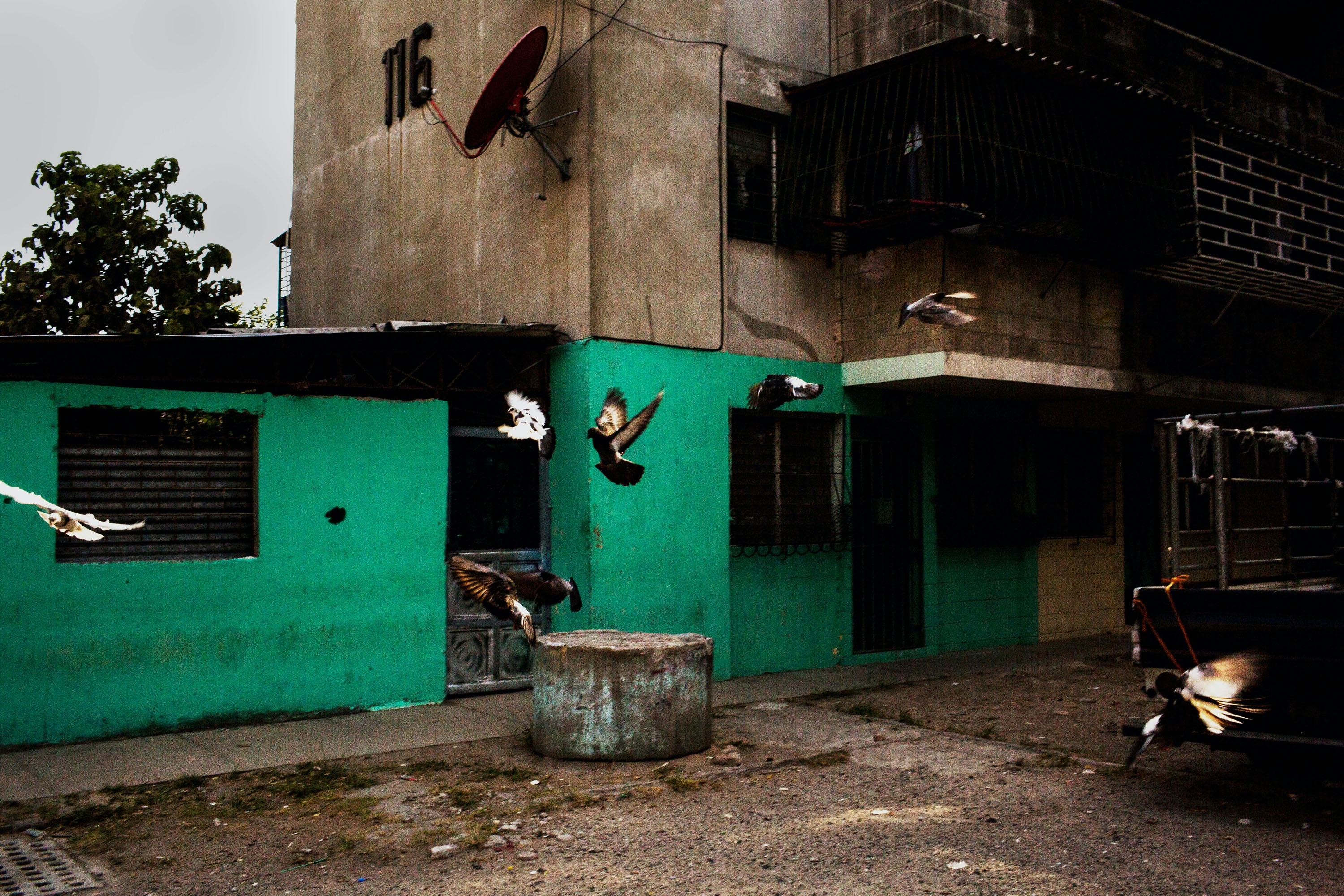 April 2017, El Salvador, San Salvador. Birds fly through a housing project in gang controlled Zacamil. (Natalie Keyssar)