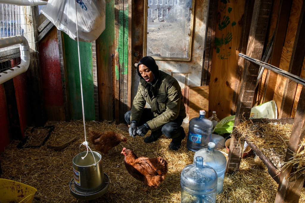 Baltimore, Maryland - February 03, 2018: Tubman House farm coordinator Ausar Amen, checks in on the chickens housed at the group's lot 2 farm space. Amen is photographed during the second day of the third Baltimore Ceasefire weekend. The farm space is located a block from where Freddie Gray was arrested in April 2015. When finished it which will grow fresh fruits and vegetables, house chickens for eggs, and fish. The group touts the farm spaces as an answer to the Sandtown Winchester neighborhood's food desert designation. The area is also known as the most incarcerated neighborhood in the state of Maryland. Groups like the Tubman House are trying to curb the systemic causes of violence in Baltimore by lifting up the communities. CREDIT: Matt Roth