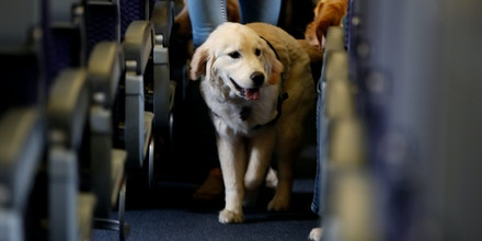 New Doj Advisory Service Animals And >> Hud Wants To Limit Access To Emotional Support Animals That Can Help