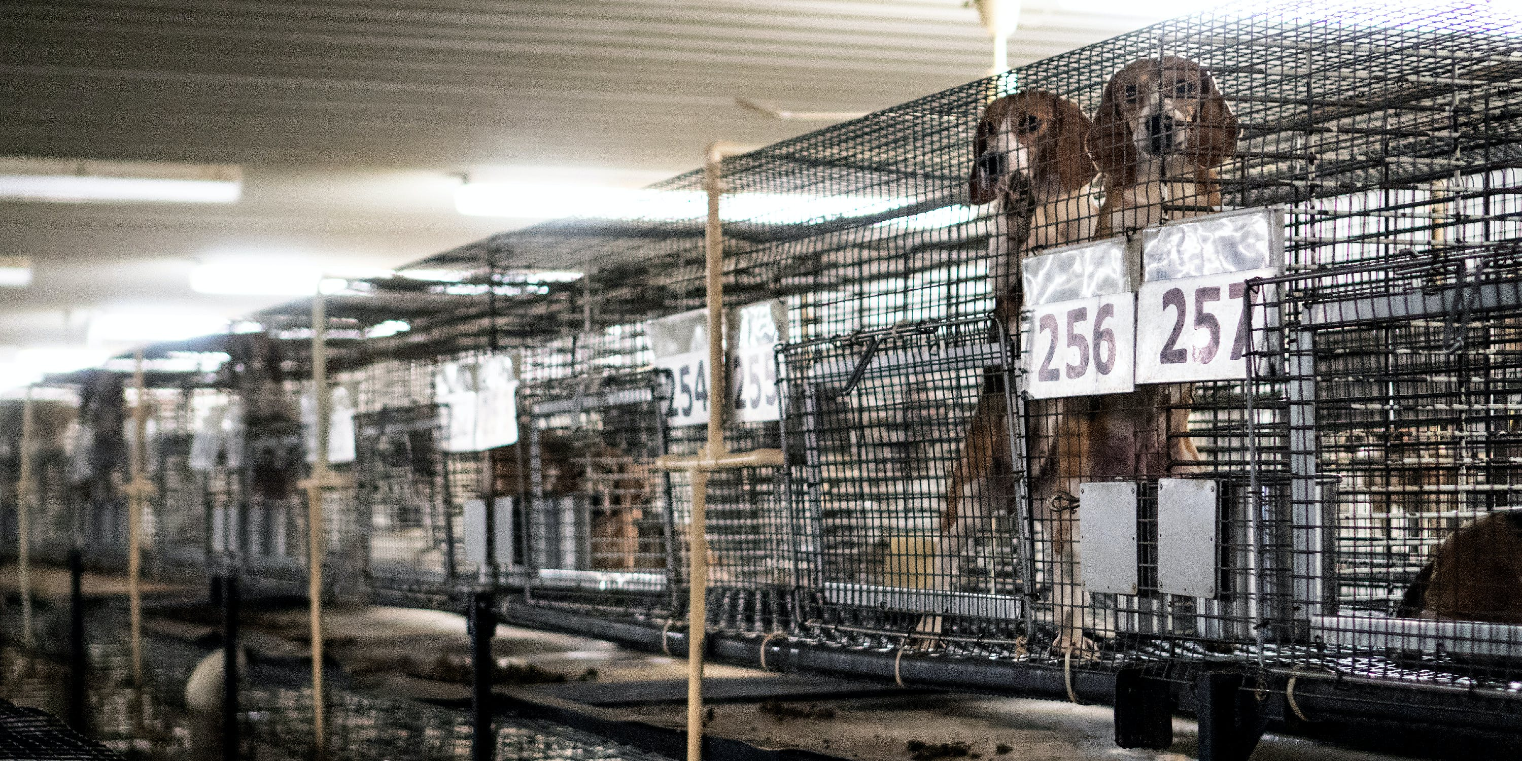 dog-experimentation-cages-feat-1526479586