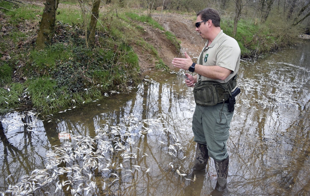 Tennessee Wildlife Resource Agency biologist Bobby Brown investigates Thursday, Feb. 22, 2018, after tens of thousands of fish died in a small, unnamed tributary running parallel to Dupont Parkway in the community of Hixson, Tenn. The small stream feeds into the Tennessee River across from the Tennessee Riverpark in Chattanooga. Note Hixson is within the city limits of Chattanooga. (Mark Pace/Chattanooga Times Free Press via AP)