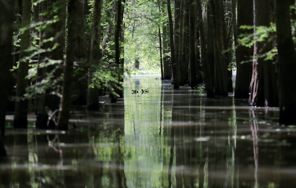 FILE - In this April 27, 2018, file photo, a old logging canal cuts through Bayou Sorrel in the Atchafalaya River Basin in Louisiana. Bayou Bridge Pipeline LLC's building a crude oil pipeline in Louisiana expects to complete the construction project by October if a federal appeals court doesn't order another halt to the work. In a court filing Wednesday, June 27, 2018, Bayou Bridge Pipeline LLC's attorneys said construction of the entire 163-mile pipeline was nearly 76 percent complete as of Sunday. (AP Photo/Gerald Herbert, File)