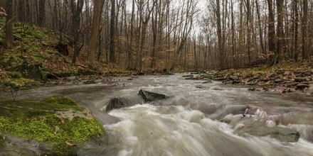 In a Wednesday, Nov. 30, 2016 photo shows the headwaters of the Loyalhanna Creek on Todd Simond's property, which is being donated to the Loyalhanna Watershed Association, in Stahlstown, Pa.   (Dan Speicher/Pittsburgh Tribune-Review via AP)