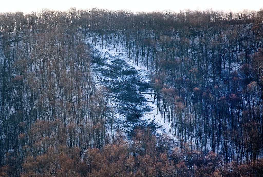 In this March 15, 2018 photo, downed trees appear on Peters Mountain in Monroe County, W. Va,  to make way for the Mountain Valley Pipeline route. Two tree sitters say they have been living on two wooden platforms hoisted high above two trees located towards the top of the mountain since Feb. 26. (Erica Yoon/The Roanoke Times via AP)