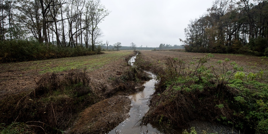 Buck Branch creek, in Eastern North Carolina, connects to the Neuse River basin.