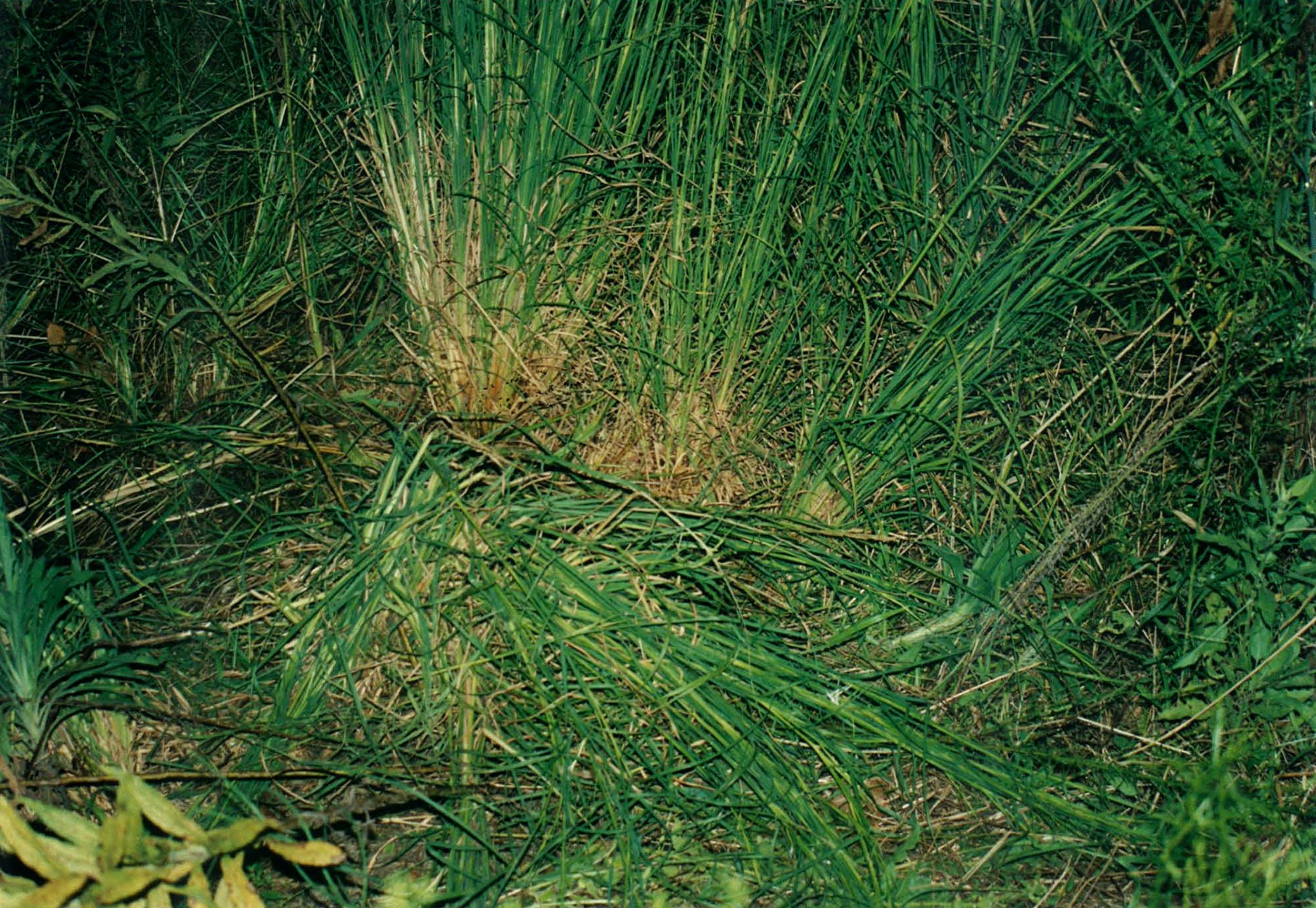 huge discount b1b70 95e6b grass-1543806060