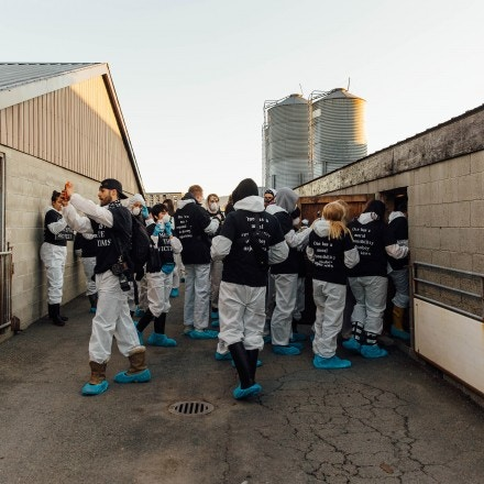 Animal rights activists enter the Excelsior Hog Farm in Abbotsford, B.C. on April 28, 2019.