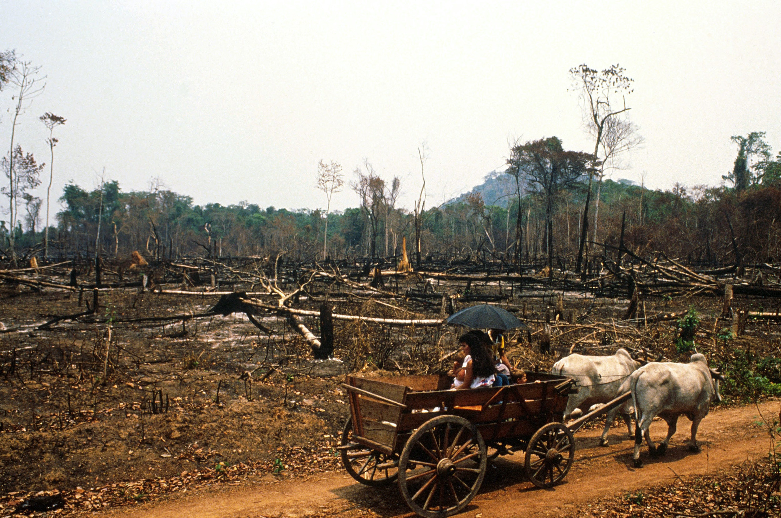 BRAZIL - AUGUST 01:  The dry bleeded amazonian forest in Amazonia, Brazil in August, 1989 - Fire in Rondonia state.