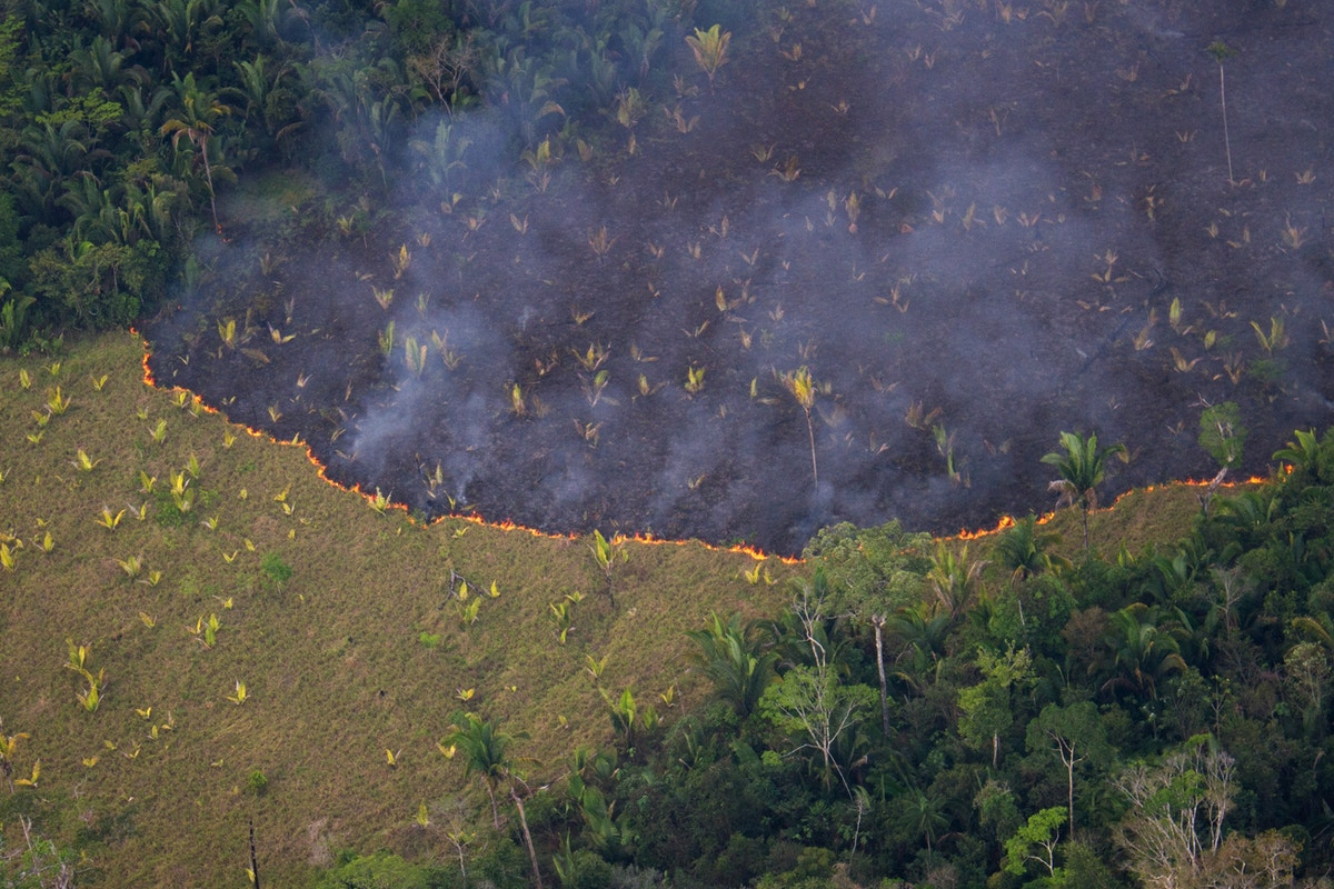 On the Front Lines of Bolsonaro's War on the Amazon, Brazil's Forest Communities Fight Against Climate Catastrophe