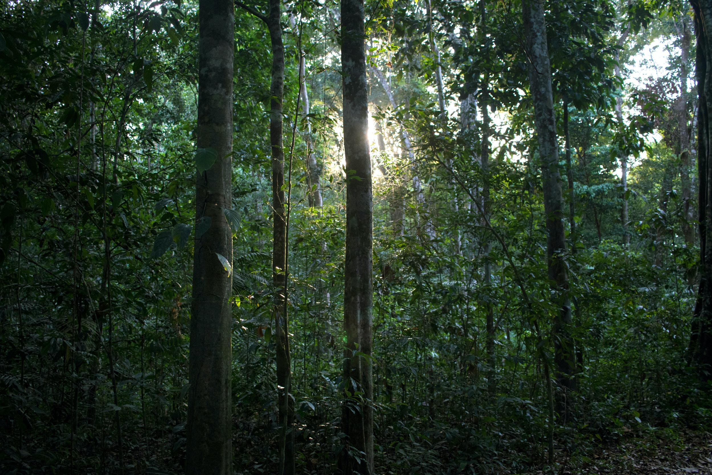 rainforest-02-1562186876-1562361747