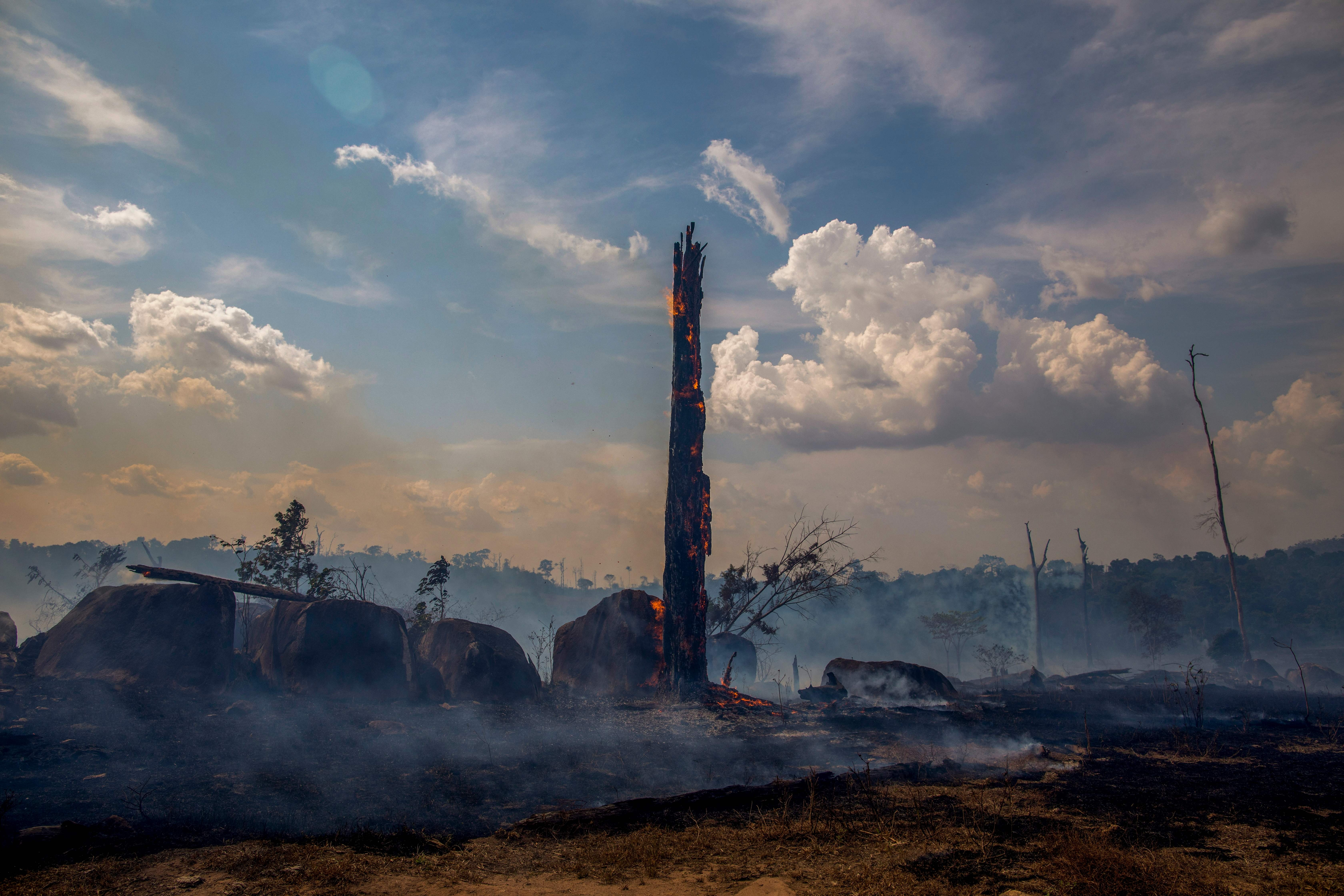 TOPSHOT - View of a burnt area of forest in Altamira, Para state, Brazil, in the Amazon basin, on August 27, 2019. - Brazil will accept foreign aid to help fight fires in the Amazon rainforest on the condition the Latin American country controls the money, the president's spokesman said Tuesday. (Photo by Joao LAET / AFP)        (Photo credit should read JOAO LAET/AFP/Getty Images)