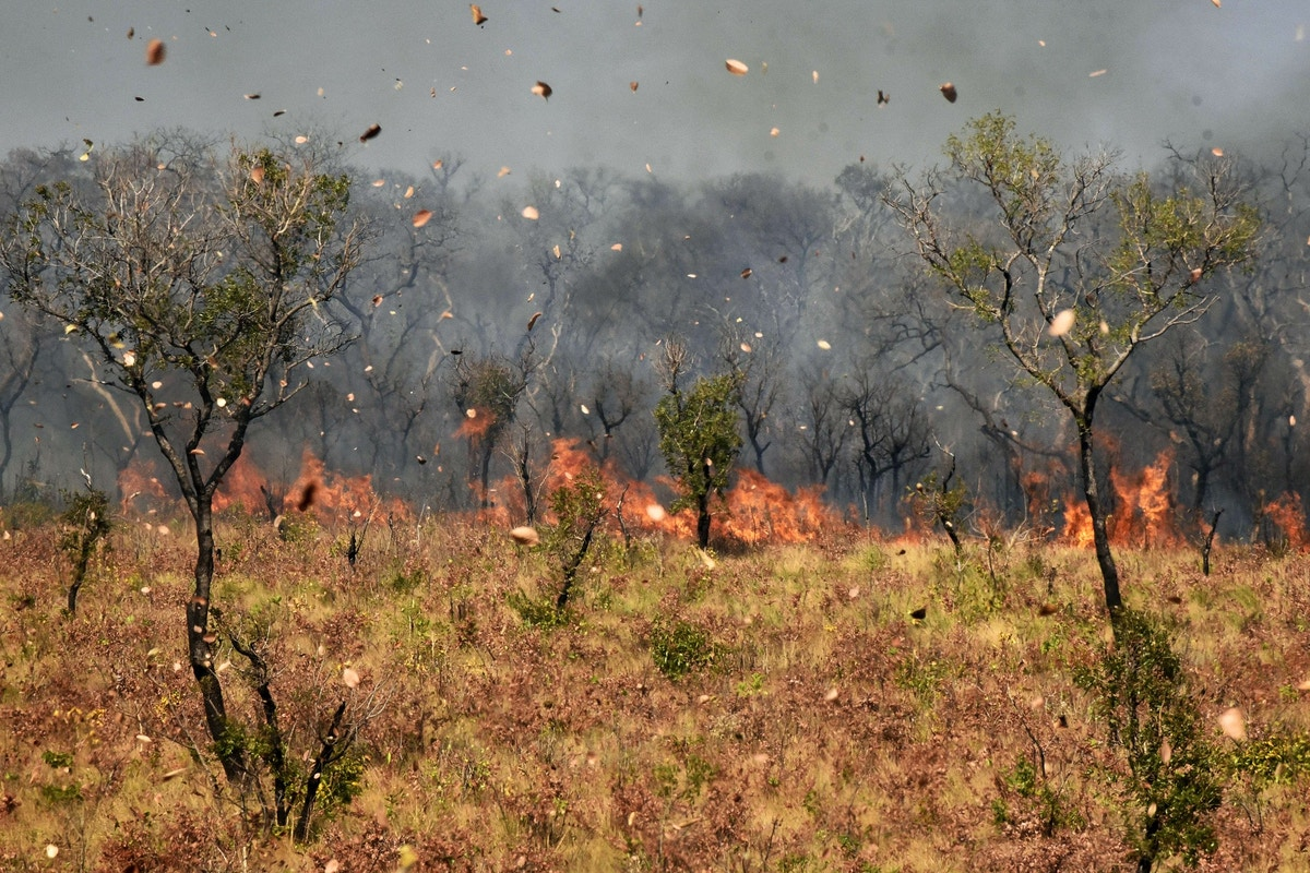 Under Left and Right-Wing Leaders, the Amazon Has Burned. Can Latin America Reject Oil, Ranching, and Mining?