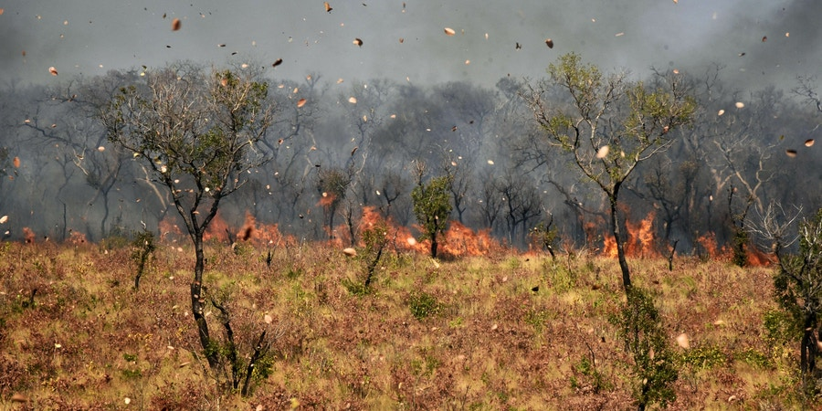 Dust and leaves blow in the wind as a fire burns near Charagua in Bolivia, on the border with Paraguay, south of the Amazon basin, on August 29, 2019. - Fires have destroyed 1.2 million hectares of forest and grasslands in Bolivia this year, the government said on Wednesday, although environmentalists claim the true figure is much greater. (Photo by Aizar RALDES / AFP)        (Photo credit should read AIZAR RALDES/AFP via Getty Images)