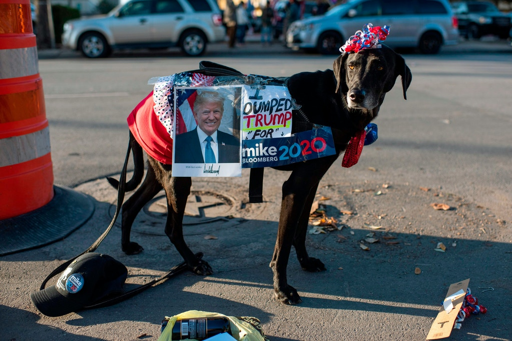 Yolanda Sutter dresses up her dog Star to show their support for Democratic presidential candidate Mike Bloomberg at the Viva Villa restaurant in San Antonio, Texas on January 11, 2020. - Democratic presidential candidate Mike Bloomberg kicks off his Texas bus tour. (Photo by Mark Felix / AFP) (Photo by MARK FELIX/AFP /AFP via Getty Images)