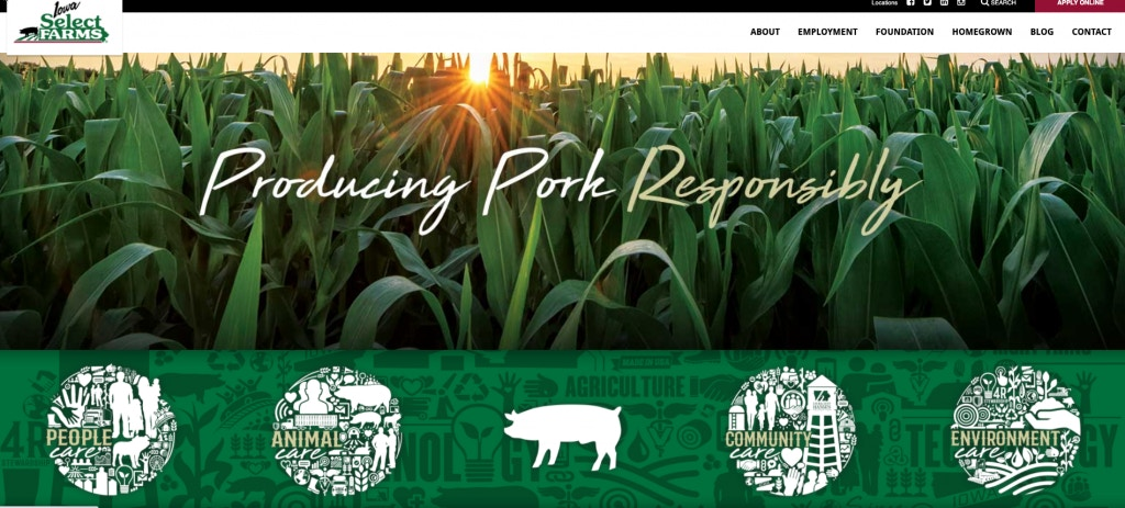 pigs-still-1-crop-1024x512 Hidden Video and Whistleblower Reveal Gruesome Mass-Extermination Method for Iowa Pigs Amid Pandemic [your]NEWS