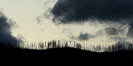 Burned trees killed by the 2018 Howe Ridge Fire stand like twigs against the evening sky.