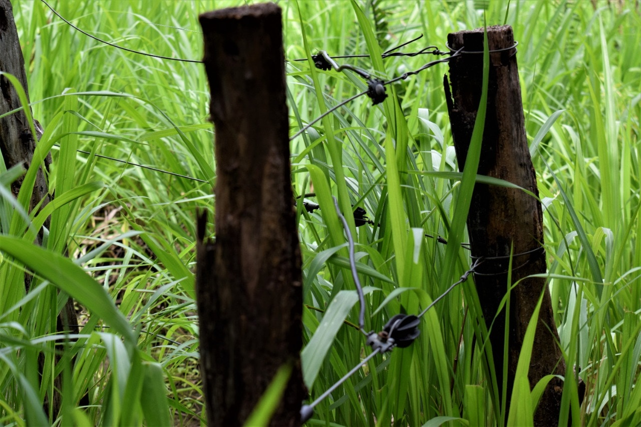Cercas-elétricas-da-Maratá-dentro-do-território-_já-nao-estão-ativadas_Foto-Ronilson-Costa_CPT-MA